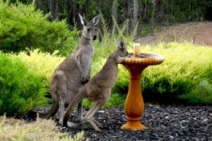 Helping Local Wildlife - Providing water